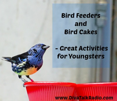 bird feeders and cakes