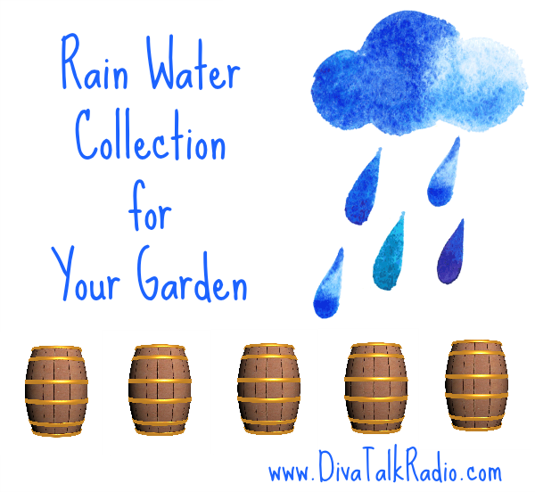 rain water collection garden