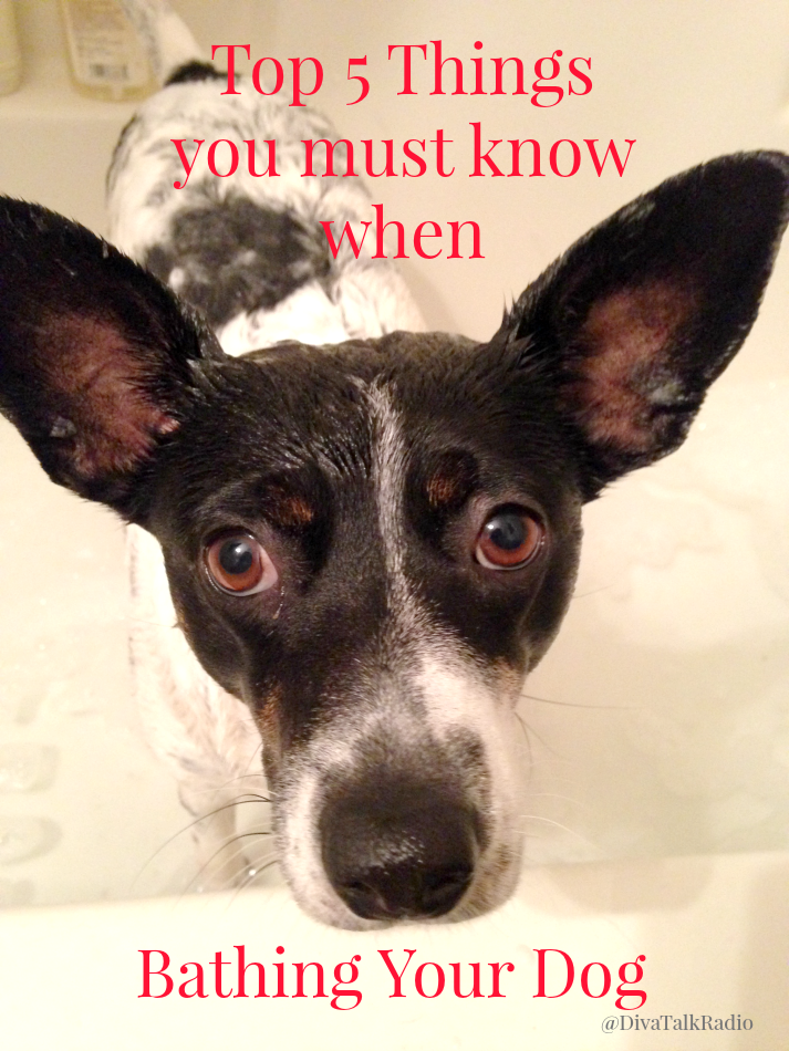 Top 5 Things You Must Know when Bathing Your Dog
